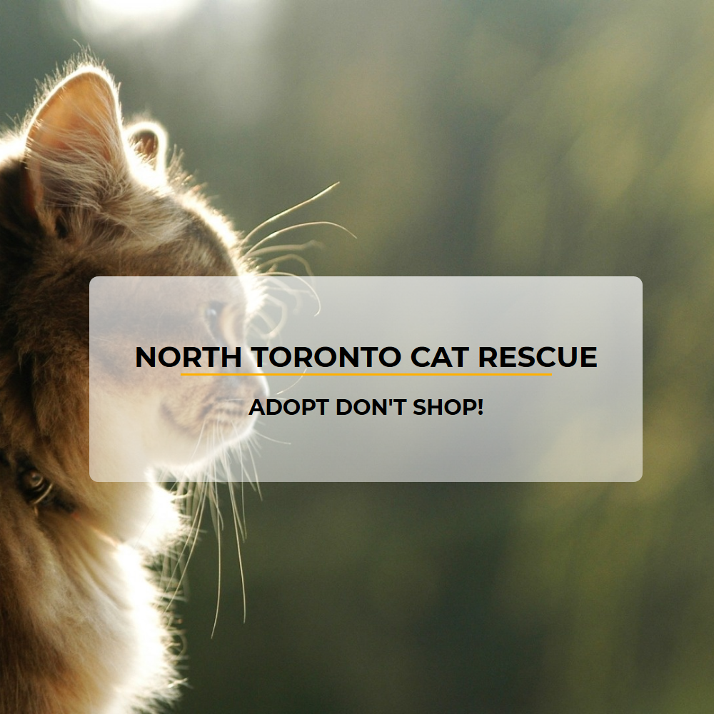 A replicate of North Toronto Cat Rescue's website.